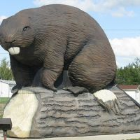 giant beaver builds giant dam, Медикин-Хат
