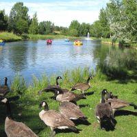 Bower Pond, Red Deer, Ред-Дир