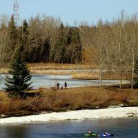 Talkers Walkers Kayakers Geese