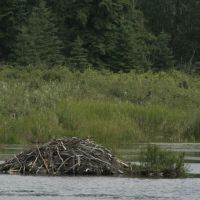Beaver Dam, Kerry Wood Nature Centre, Ред-Дир