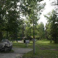 Petrified wood, Rotary Park, Ред-Дир