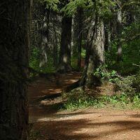 Red Shale Deer Trail, Ред-Дир