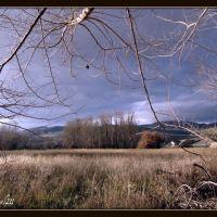 Heron grove in Vernon, B.C., Вернон