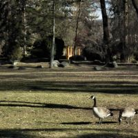 A Spring Day in Polson Park, Вернон