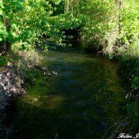 Ducks in the river, Вернон