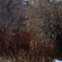 Winter Foliage, Камлупс
