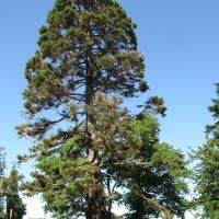 Sequoia Park, Кампбелл-Ривер