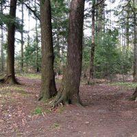 Sherbrooke wood, Шербрук