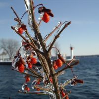 Winter Berries, Броквилл