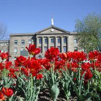 Courthouse Tulips - Brockville On. - 2005, Броквилл