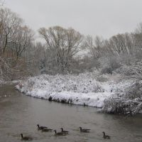 Canada Geese in Waterloo Park, February 2006, Ватерлоо