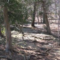 Bruce Trail, Гримсби