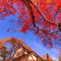 Old Oak Tree, Ла-Саль