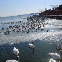 Swans and Mallards, Ла-Саль