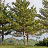 Water Front Trees, Норт-Бэй