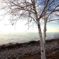 Birch Tree - North Bay Waterfront, Норт-Бэй