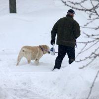 του σκυλου το δικαιωμα της βολτας....., Ошава