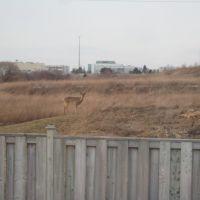 Deer Sighting, Ричмонд-Хилл