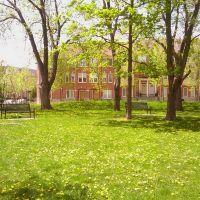 Dandelion in the park, Ричмонд-Хилл