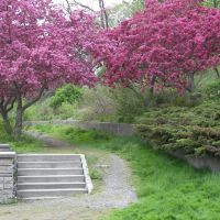 St. Catharines Ravine - Spring Trees, Сант-Катаринс
