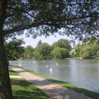 Cisnes en Avon River-Stratford, Стратфорд