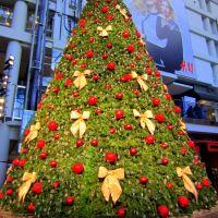 Swarovski Christmas tree ---Eaton Centre, Торонто