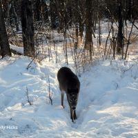 Deer, Тундер Бэй