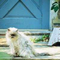 Fluffy cat, Торнхилл