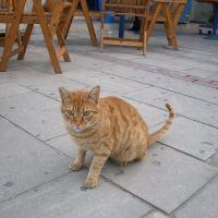 Cat, Ларнака