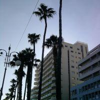 Finikoudes-Larnaca promenad, Ларнака