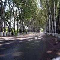 Тополиная аллея близ Чолпон-Аты., Бостери