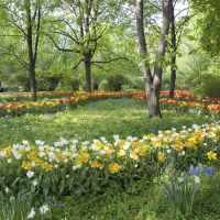 Aptekarskiy Ogorod (Botanical garden MSU). Tulips. May 2007. — Аптекарский огород (Ботанический сад МГУ). Тюльпаны. Май 2007., Покровка