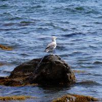 2011.09.12 | Чайка, Рыбачье