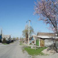 Vanahuna st., Кант