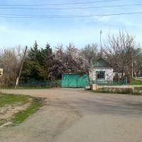 Leningradskaya/Toktogula, Кант