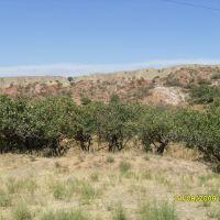 Pistachio trees, Майлуу-Суу