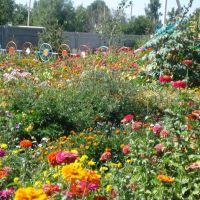 Цветы перед американским парком., Токмак