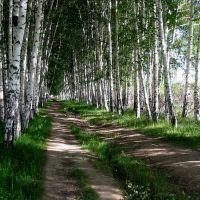 Birkenallee, Чолпон-Ата