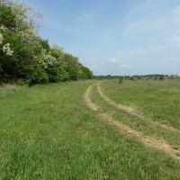 Дорога Вдоль Леса 2012, Along the Forest Road, Карамык