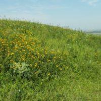Растительность На Возвышенности 2012, Vegetation on the Hills, Карамык