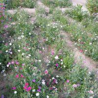 植物园的花园, Баотоу