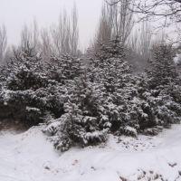 树, Баотоу