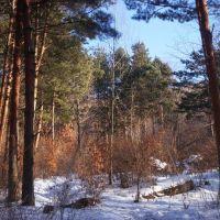 苇河林区的茂密森林, Аншань