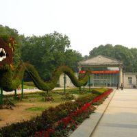 武汉解放公园的草龙, Ухань