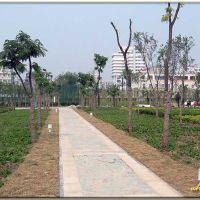汉口江滩二期——大片的绿化带, Ухань