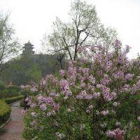 水泉寨公园景色, Кайфенг