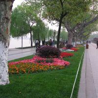 Beautiful flowers along the West Lake walk, Ханчоу