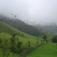 Bosque de Niebla, Апаран
