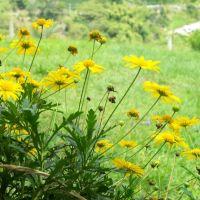 flores amarillas en parador turístico de armenia, quindío, Апаран