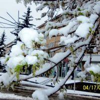 Spring & Winter at same time, Ванадзор